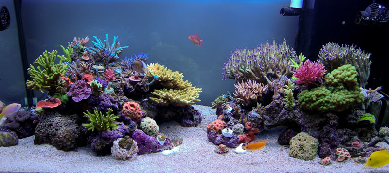 Looking For Advice Examples For Center Overflow Aquascape Reef2reef Saltwater And Reef Aquarium Forum