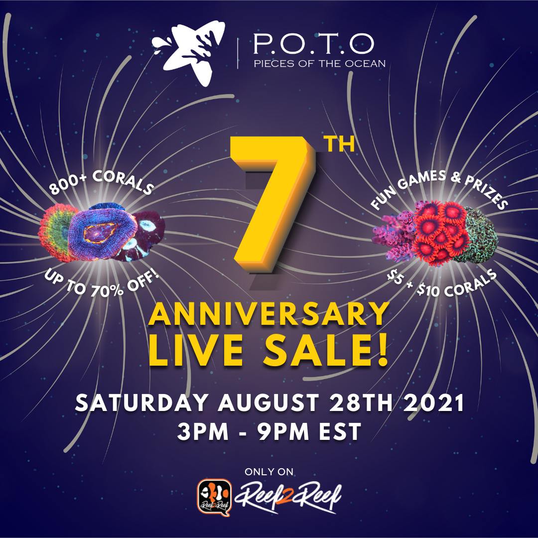 POTO 7th Anniversary Sale 1x1 - revised.png