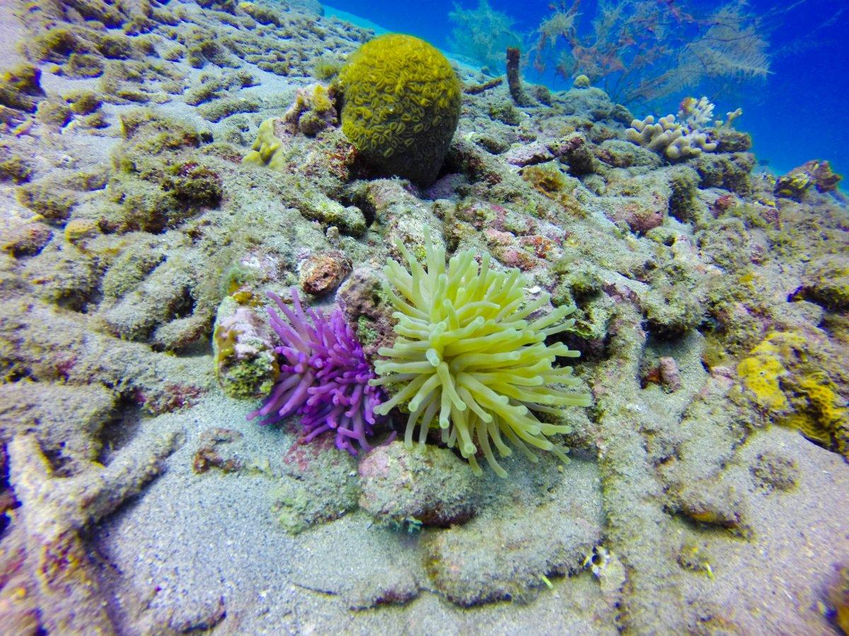 purple anemone (1 of 1).jpg