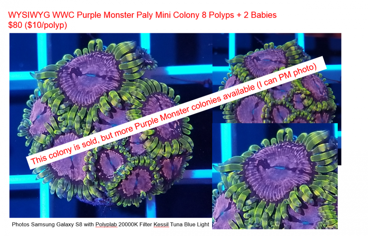Purple Monster Sold Photo.png
