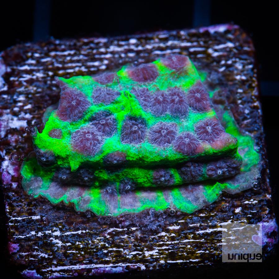 purple people eater 58 38.jpg