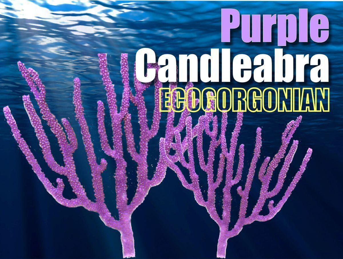 Purple_Candleablra_1200x.jpg