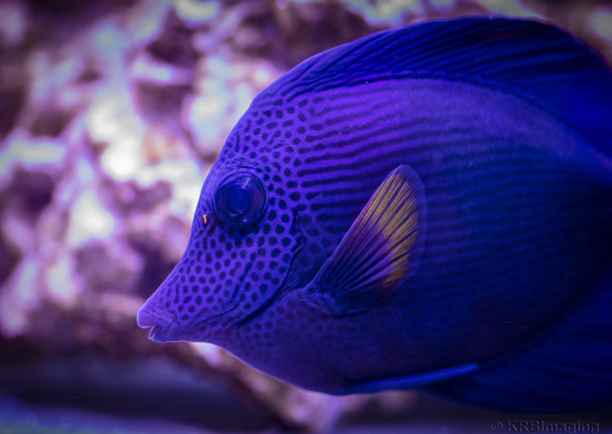 Purplehaze-2265.jpg