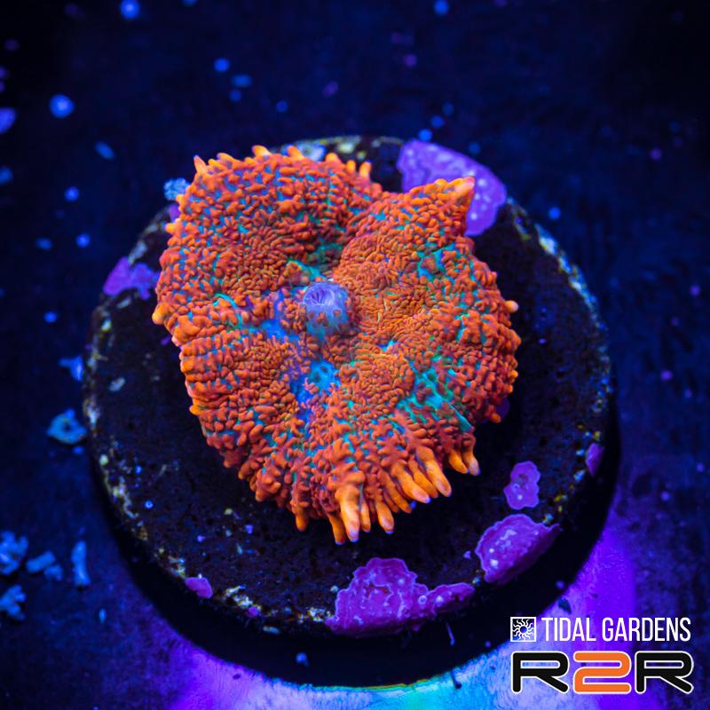 r2r-five-f7.jpg