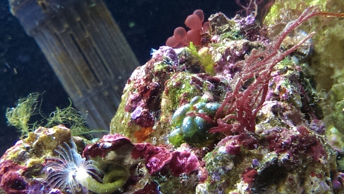 R2Rlrbubblealgae.jpg