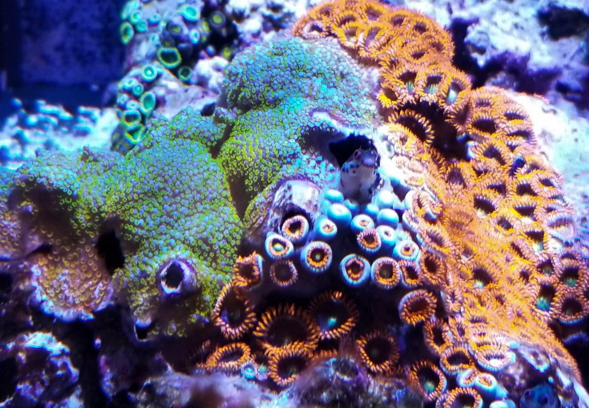 Rainbow monti-barnacle (1 of 1).jpg