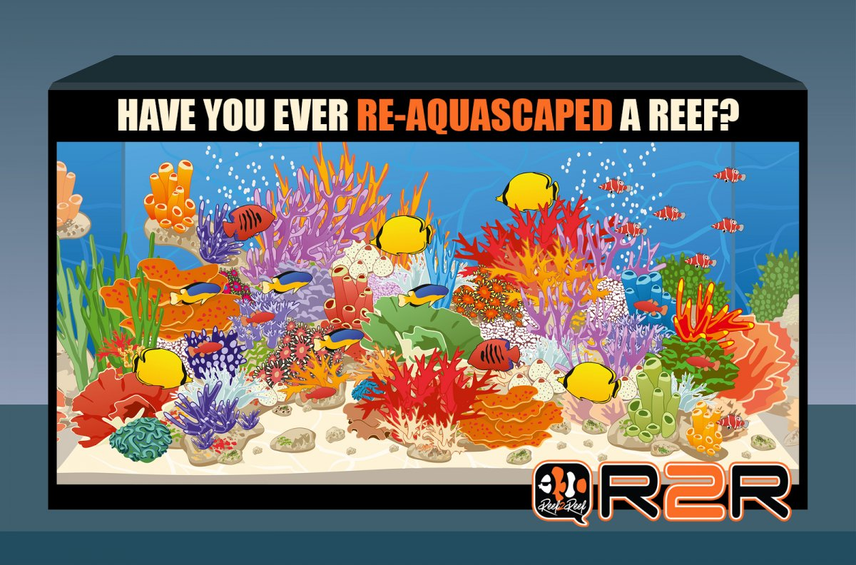 REAQUASCAPED A REEF copy.jpg