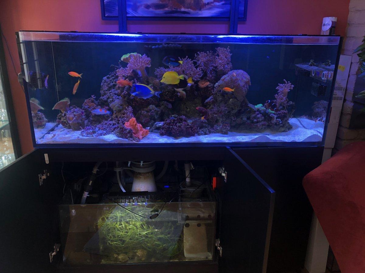 Red Sea 525XL.jpg