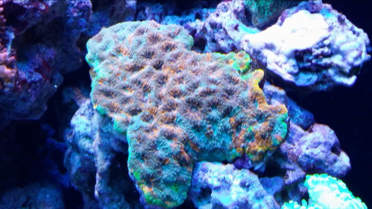 Red Sea Colors.jpg
