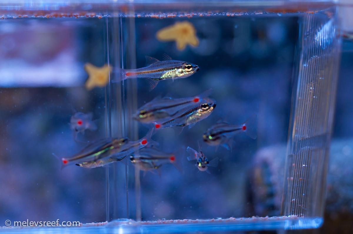 Fish aquarium red spots - Red Spots 1200px Jpg