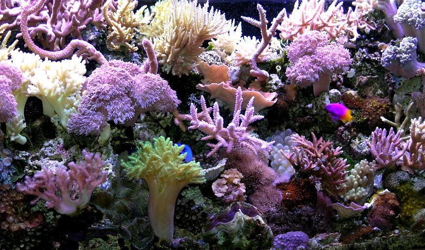Reef-05-07-05.jpg