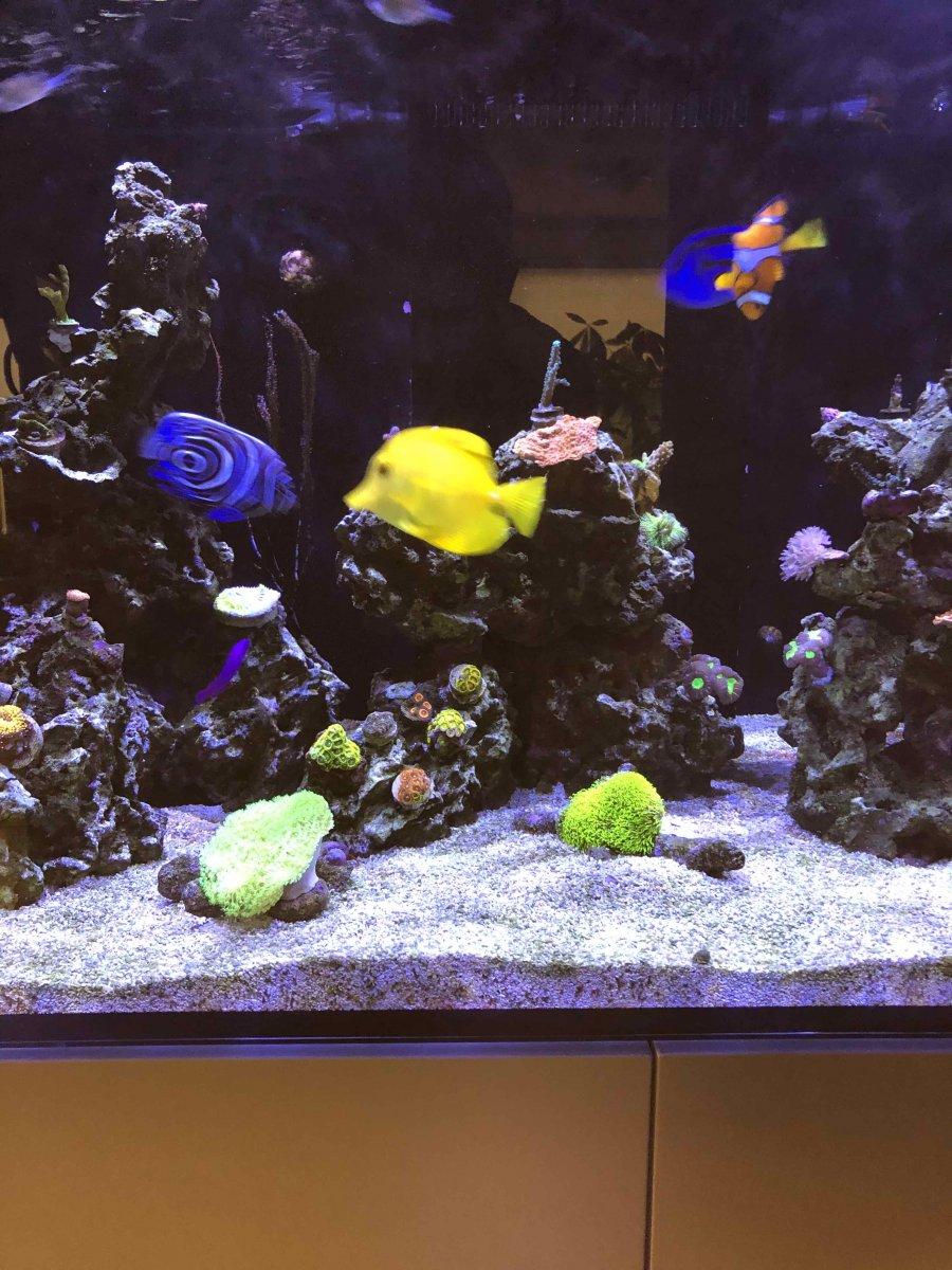 reef 1.jpg