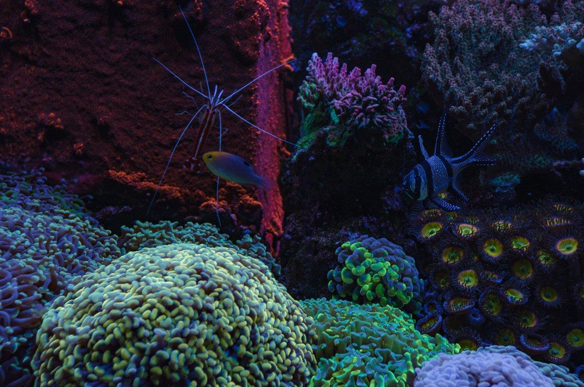 reef-10.jpg