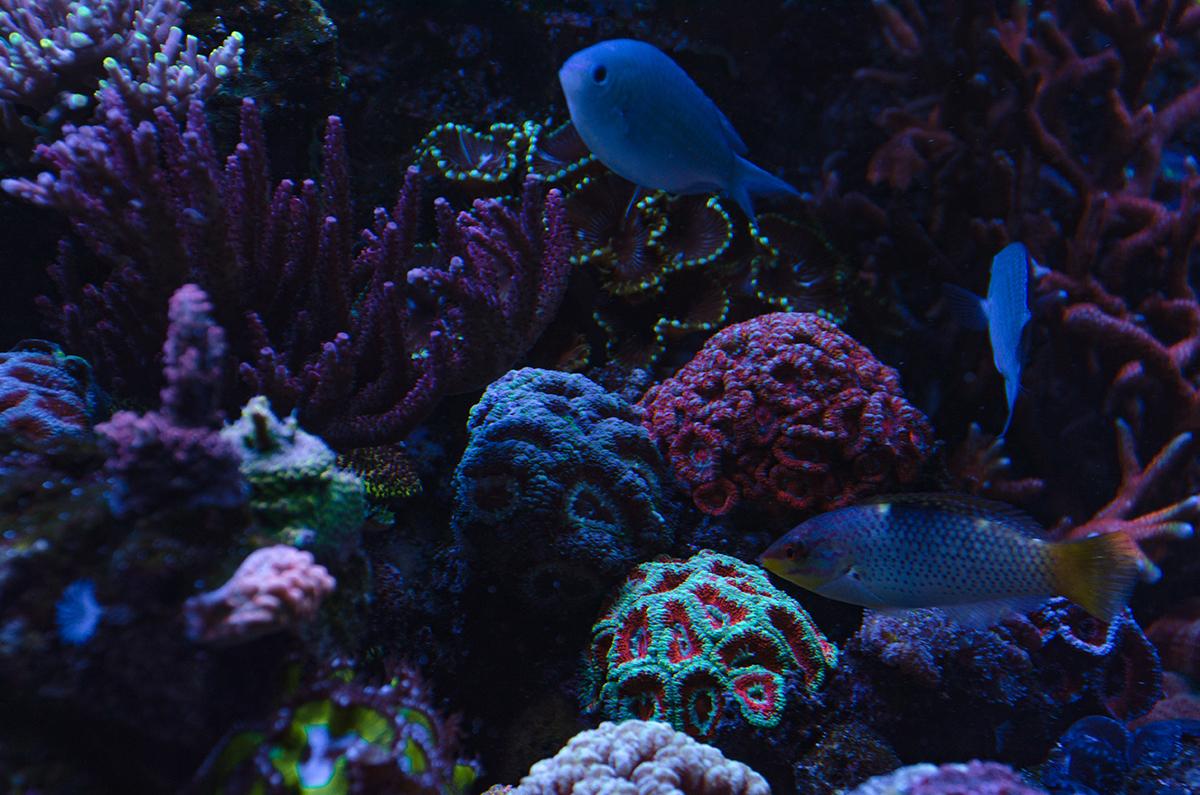 reef-11.jpg