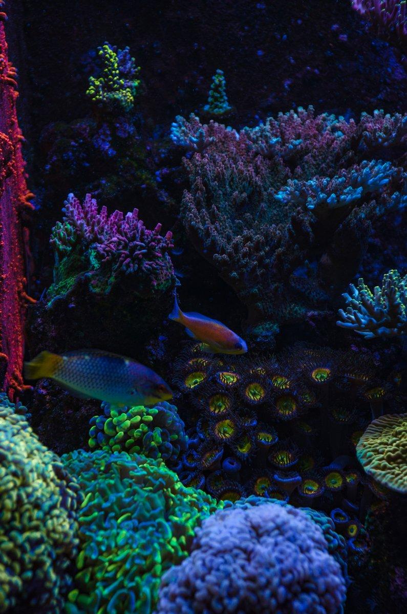 reef-2.jpg