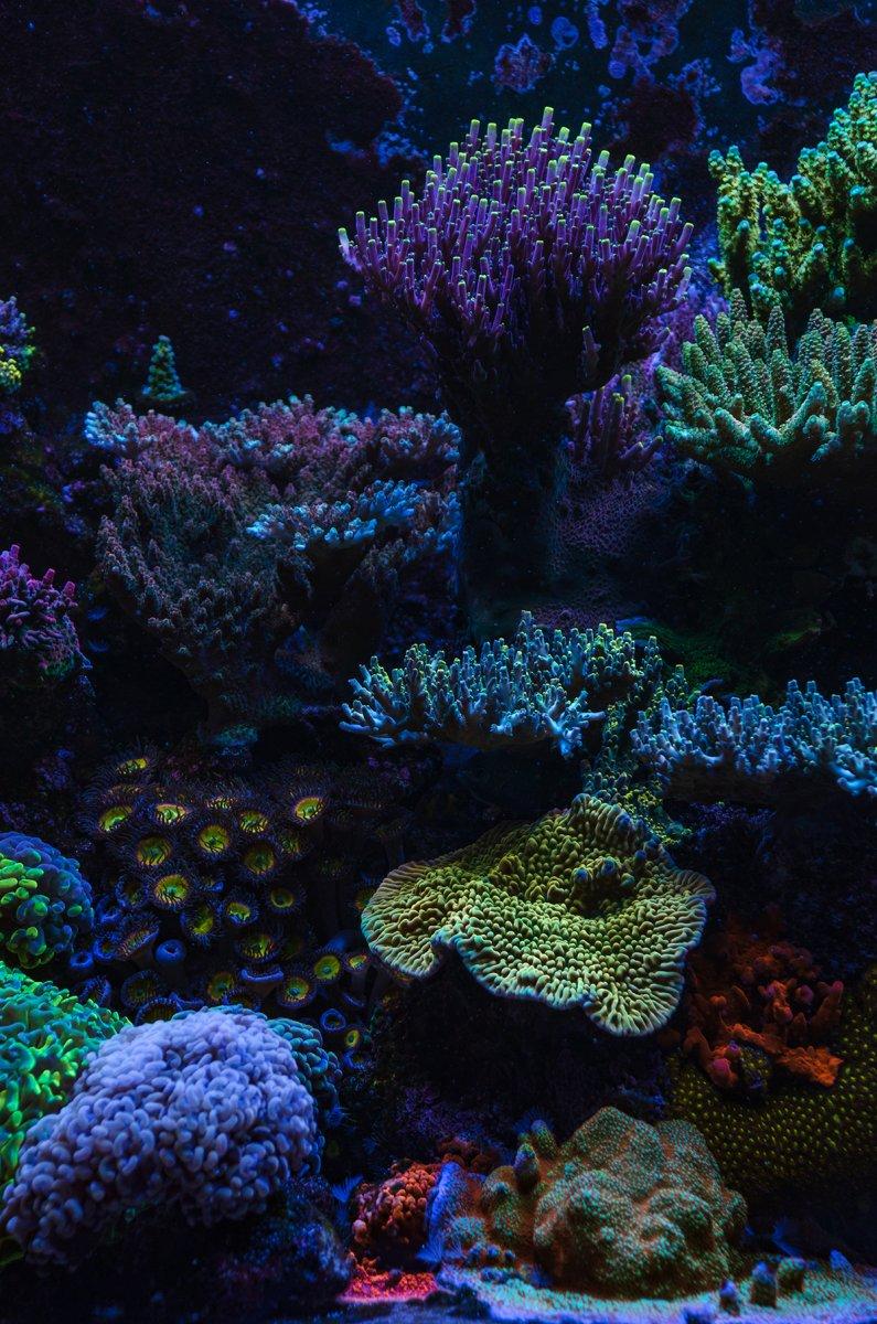 reef-3.jpg