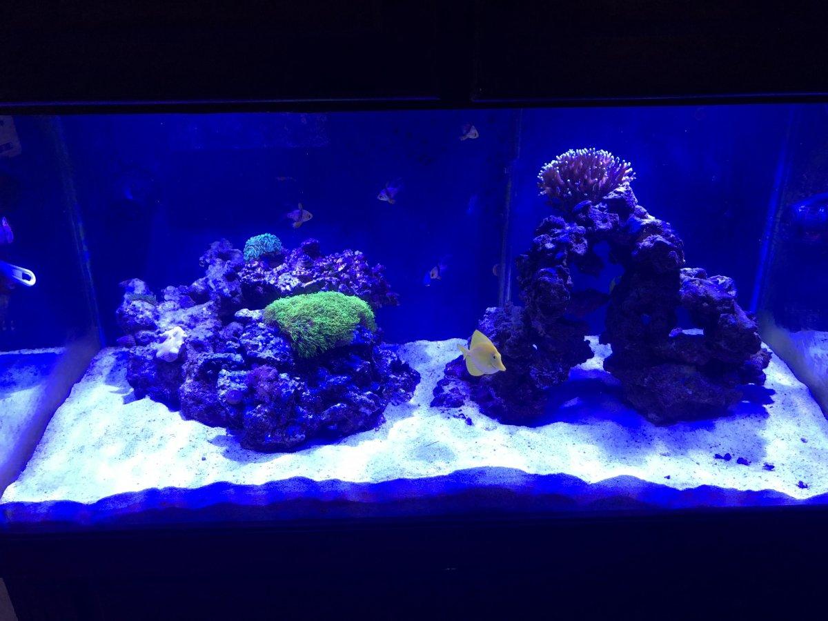 reef 4.jpg