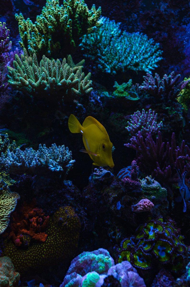 reef-6.jpg