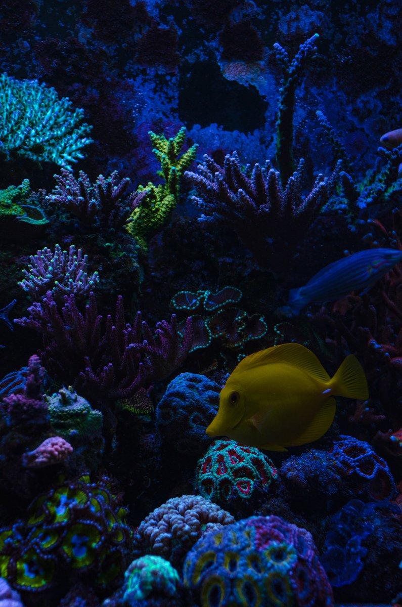 reef-7.jpg