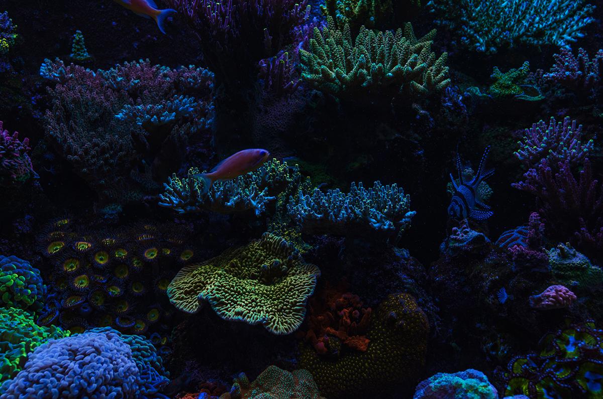 reef-8.jpg