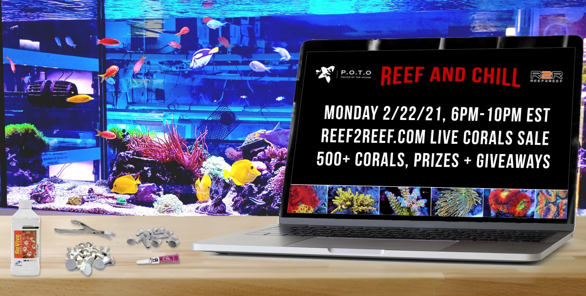 reef-and-chill.jpg