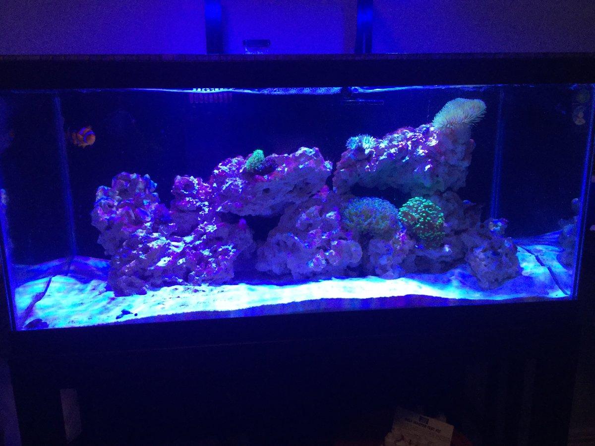 Reef Feb 2018.JPG