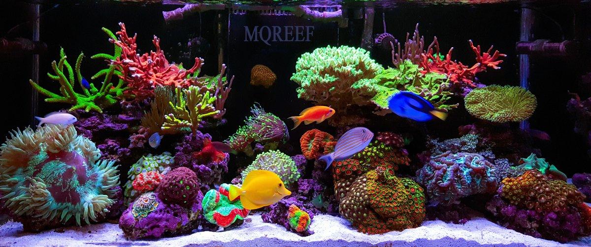 reef July.jpg
