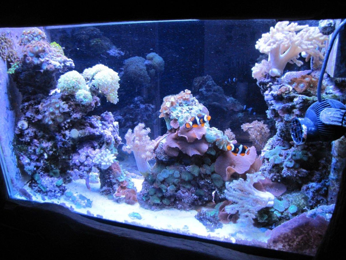 reef march2020.JPG