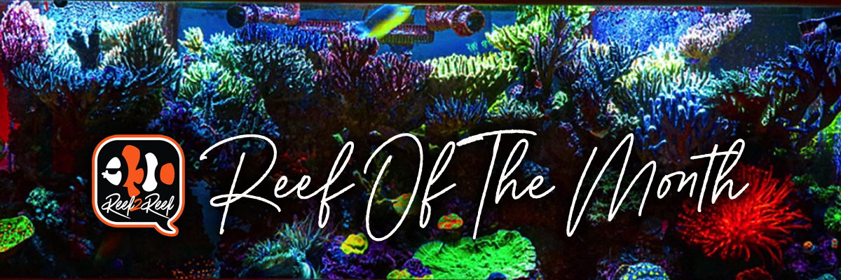 Reef of the month header.png