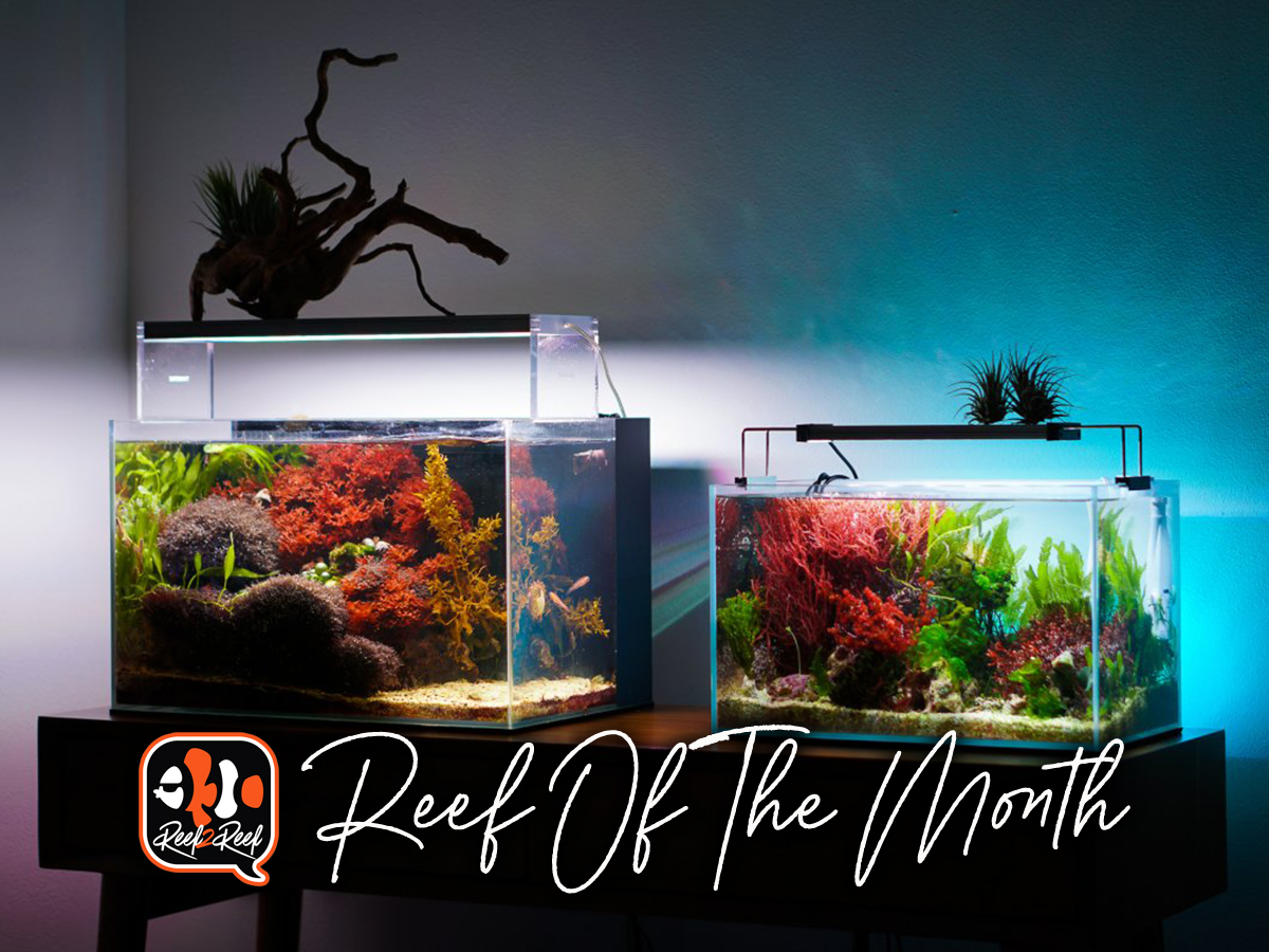Reef of the month .jpg