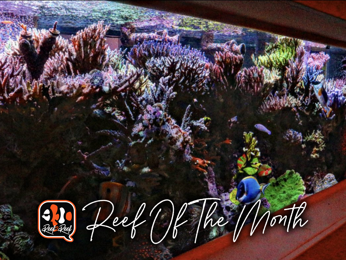 Reef of the month title.png