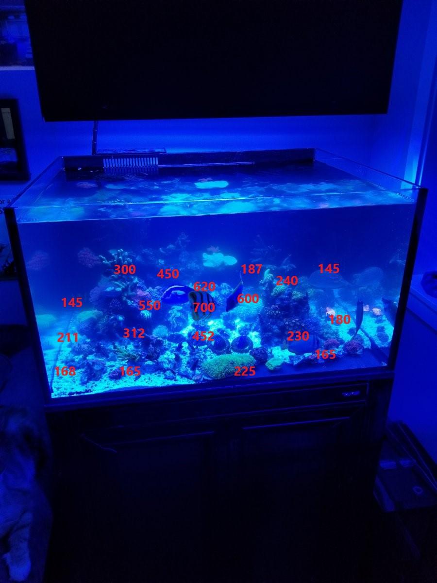 reef par bottom.jpg