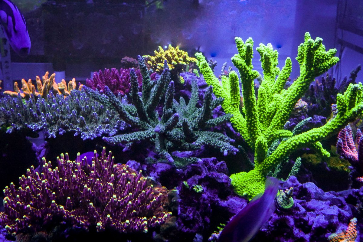Reef resize.jpg