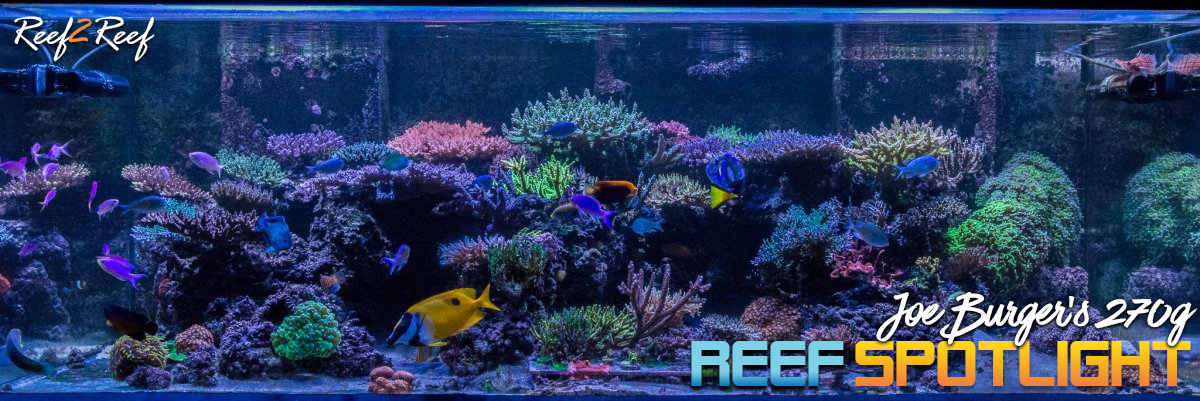 r2r reef of the month joe s 270 gallon sps reef march 2018