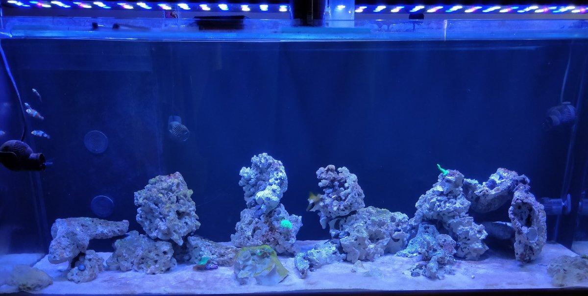 Reef tank 10 weeks.jpg