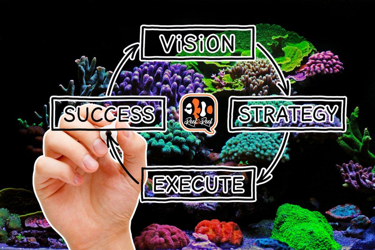 Reef Vision copy.jpg