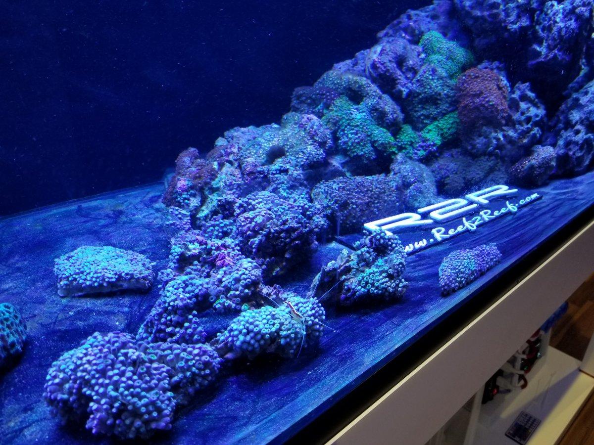 reef2reef.jpg