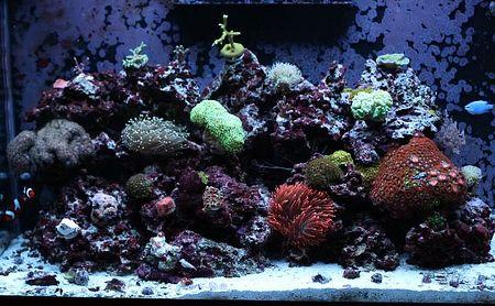Reef_007.jpeg