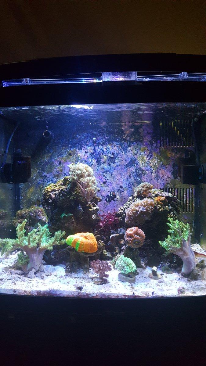 Reef_tank.jpg