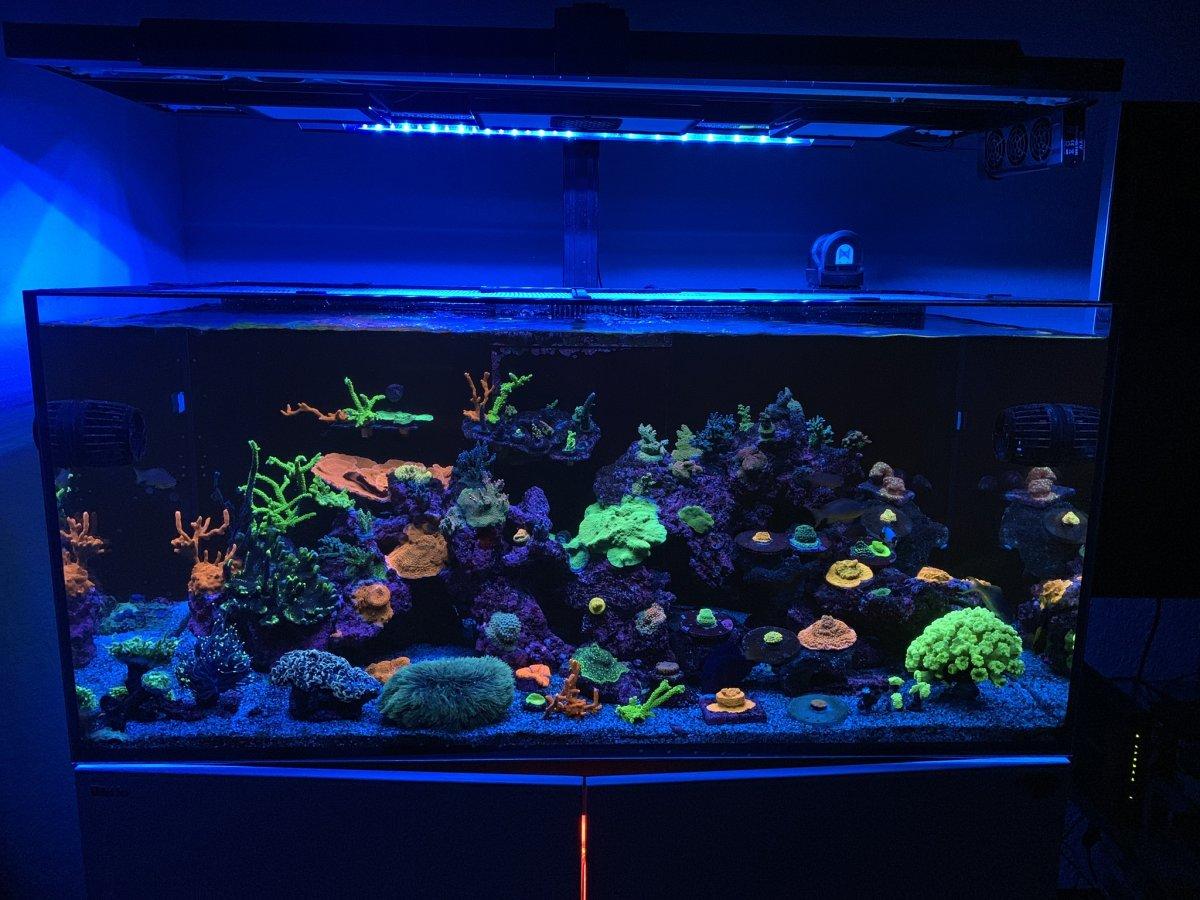 Reefer425xl.jpg