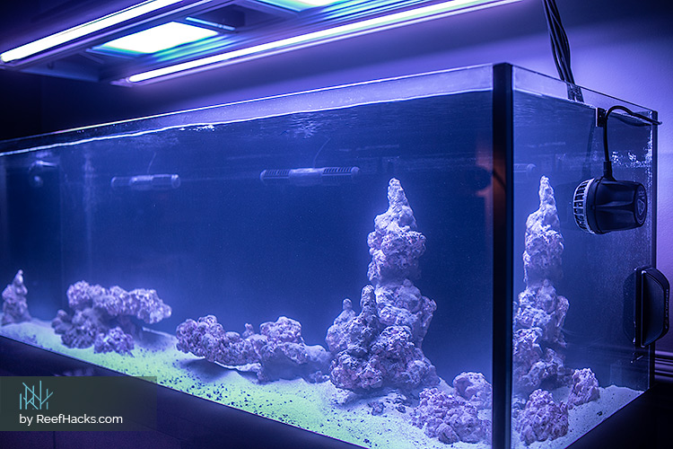 ReefHacks_Scape.jpg