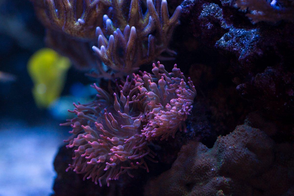 ReefTankNov17-4.jpg