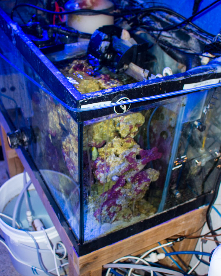 Refuge-Compartment-BoxFish.jpg
