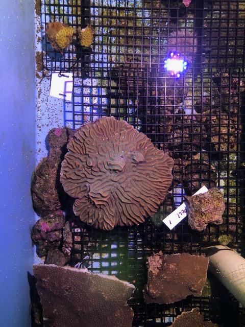 rescued coral2.jpg