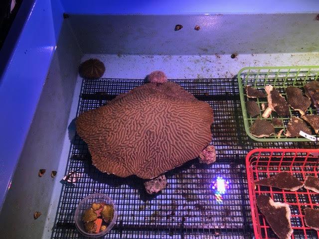 rescued coral3.jpg
