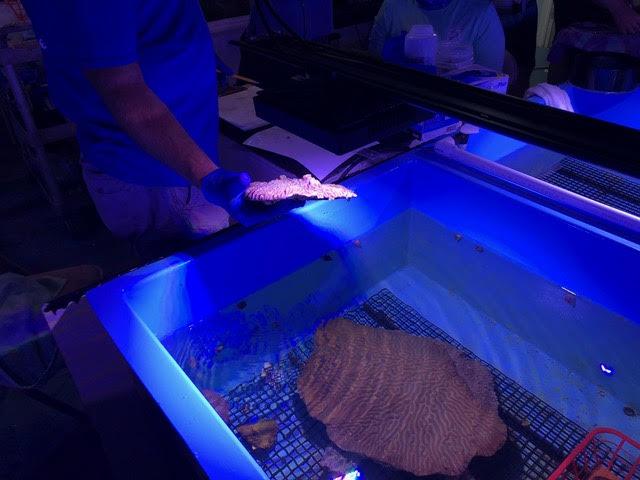 rescued coral5.jpg