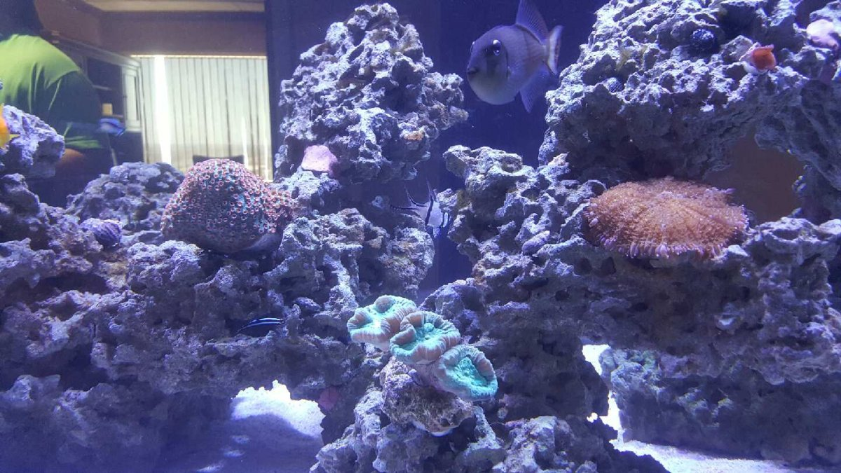 Maddyp 400g Office Reef Reef2reef Saltwater And Reef
