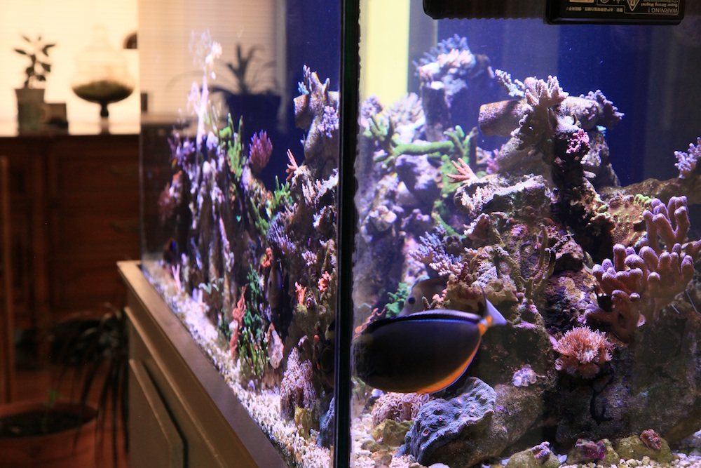 right side 2 of matt geldof 120 gallon reef aquarium.jpg