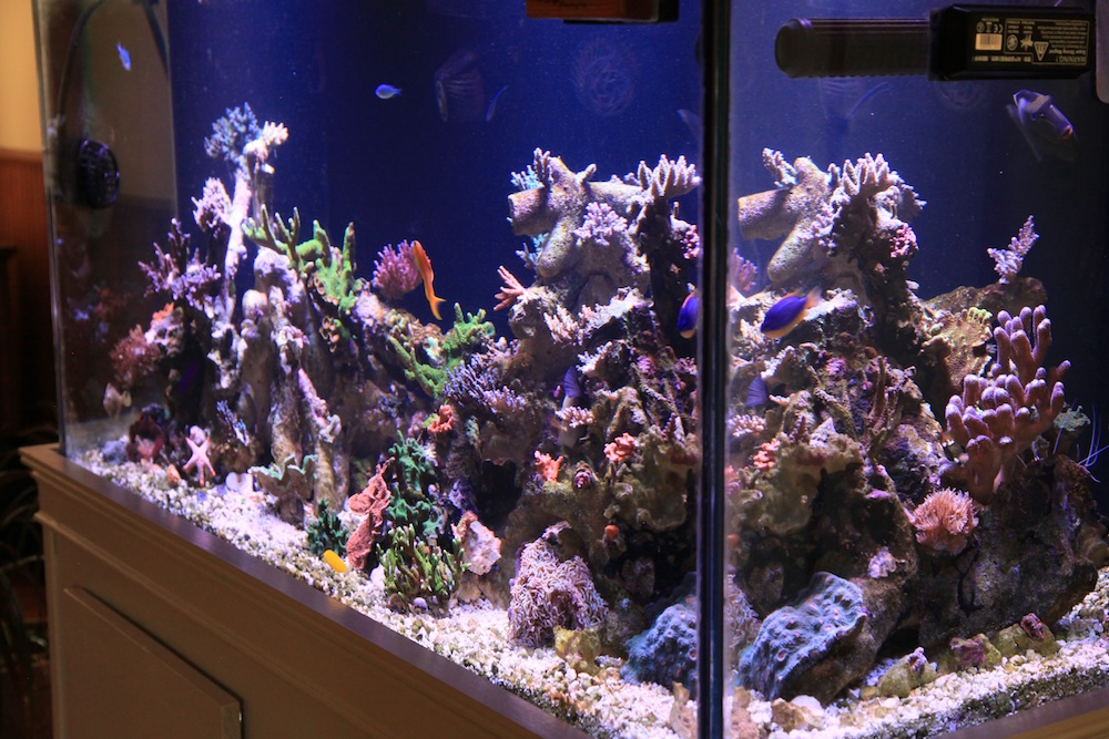 right side of matt geldof 120 gallon reef aquarium.jpg