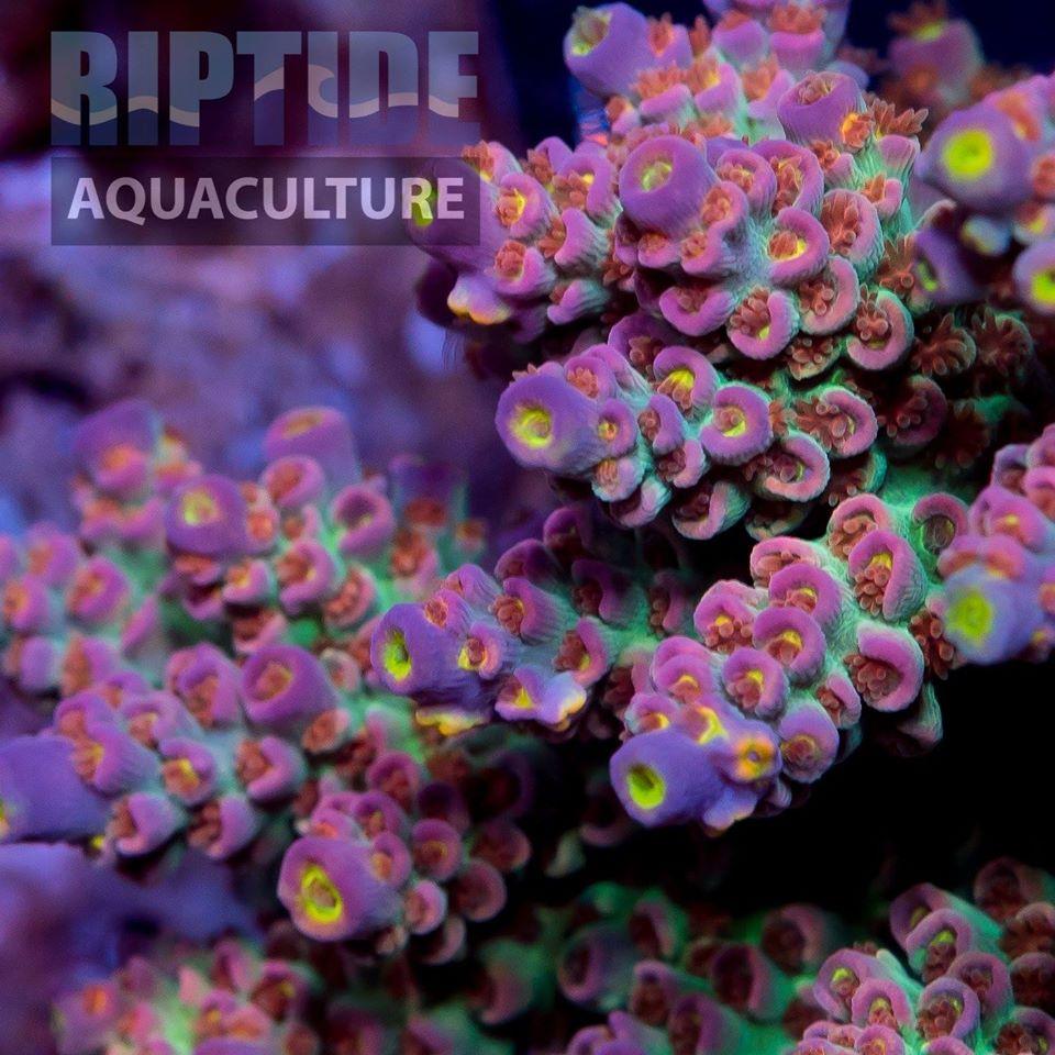RIPTIDE2.jpg